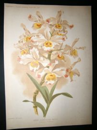Amateur Gardening 1896 Botanical Print. Warm Greenhouse Orchid